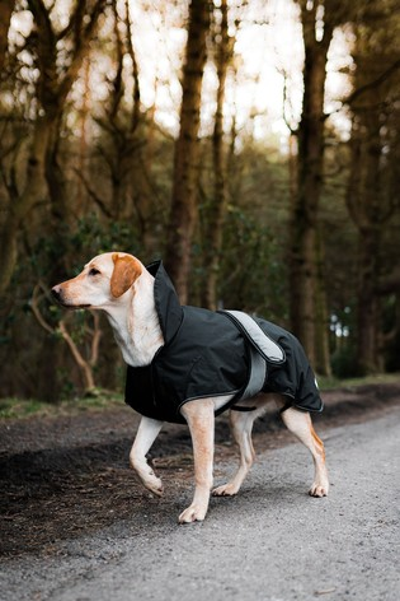 Danish Designs 2 in 1 Ultimate Dog Coat